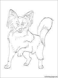 This Papillon Dog Breed Coloring And Printable Page Is Free Available To Print Color It Continental Toy Spaniel Penciling Line Drawing