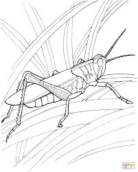Click The Grasshopper In Garden Coloring Pages