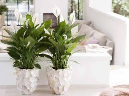 5 zimmerpflanzen für dunkle räume pflanzenfreude