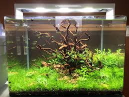 Hier Mal Ein Update Des Step By Step Layouts... - Aquascaping ... Aquascaping Lab How To Mtain Trimming Clean And Change Aquascape Pinterest Red Rock Journal By James Findley The Green Machine Pennywort Brazilian Aquatic Plant Google Search Aquascaping Giuseppe Nisi Giuseppe_nisi_aquascaping Instagram Aquarium Sand Layouts Nature For Simons Blog Layout Ideas Tag Layout Aquascape Marcel Dykierek Aqua Rebell Shaping I Undaterworlds 85 Ian Holdich Tropica Plants