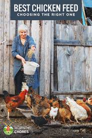 Best 25+ Laying Hens Ideas On Pinterest | Chicken Breeds For Eggs ... Why Should You Compost Chicken Manure Is Naturally High In 1105 Best Backyard Project Images On Pinterest Raising Baby Chick Playground Coops Pet Chickens And Worming Backyard Controversial Here Are Tips How To Naturally Treat Coccidiosis Your Chickens Natural Treatment Of Vent Prolapse Ducks 61 To Me Raising Means Addressing Healthkeeping Deworming Homesteads