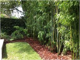 Backyards : Bright Landscape Design Bamboo Irrigation Blg ... Shop Backyard Xscapes 96in W X 72in H Natural Bamboo Outdoor Backyards Stupendous 25 Best Ideas About Fencing On Escapes American Design And Of Backyard Scapes Roselawnlutheran Interior Capvating Roll Photos How Use Scapes 175 In 6 Ft Slats Landscaping Xscapes Online Outstanding Xscapes Rolled Create Your Great Escape With Backyardxscapes Twitter X Coupon Home Decoration
