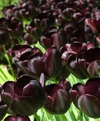 49 best purple images on colors
