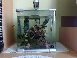 aquarium nano eau de mer 03092010 jpg