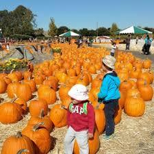 Nearest Pumpkin Patch Shop by Spina Farms Pumpkin Patch 366 Photos U0026 125 Reviews Pumpkin