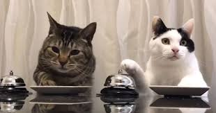 service cats treat craving cats just ring the bell for service mnn