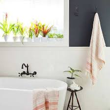 Good Plants For Windowless Bathroom by 11 Plants That Will Grow Better In Your Bathroom