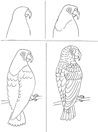 1195x1600 Art Class Drawing Ideas Parrots He Takes To