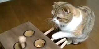 Clever Cat Operates A Custom Whack Mole Toy