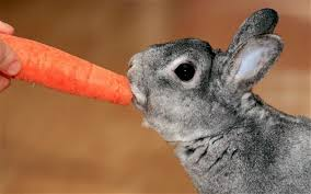 Can Rabbits Eat Roasted Pumpkin Seeds by Which Human Foods Can Rabbits Eat Quora
