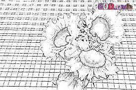 Tournesol Image Coloriage Fleurs Illustration Fleurs Coloriages