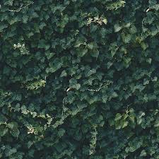 Seamless Dark Green Ivy Wall Pattern Pyrography By Elena Voronina