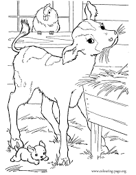 A Cute Baby Calf In The Barn Coloring Page