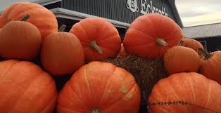Pumpkin Farms In Belleville Illinois by Take Your Pick At These St Louis Pumpkin Patches