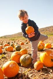 Pumpkin Patch Glastonbury Ct by These 8 Charming Pumpkin Patches In Connecticut Are Picture