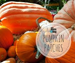 Pumpkin Patch Hayrides Lancaster Pa by The 2017 Dallas Pumpkin Patch Guide