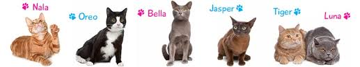 cat names cat names search find the name for your cat