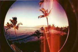 Beach Beautiful California Dream Happiness Ocean Palm Sea