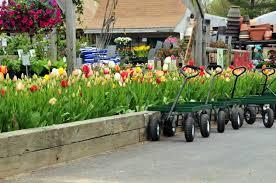 flower bulbs for garden centers farmer gracy wholesale flower bulbs
