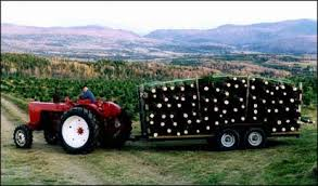 Christmas Tree Baler by Willey U0027s Christmas Tree Farm Harvesting Trees