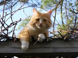 cat on low angle portrait of cat on tree against sky free stock photo