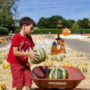 Pumpkin Patch San Jose 2015 by Jacobs Farms 92 Photos U0026 17 Reviews Pumpkin Patches 5285