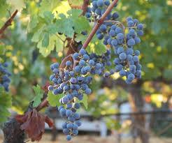 100 Meadowcroft Wines Meadowcroft Twitter