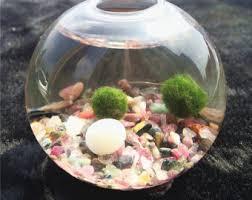 mini kit aquarium 2 mousse boules verre galets peu fan de