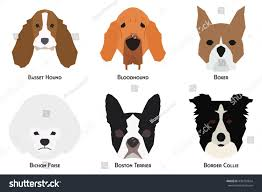 Do Wheaten Terrier Dogs Shed by 100 Do Border Terriers Shed How Bad Do Boston Terriers Shed