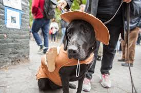 Tompkins Square Park Halloween Dog Parade 2015 by Photos City Dogs Strut Their Stuff At Tompkins Square Halloween