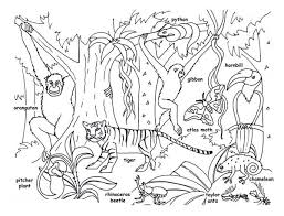Rainforest Animal Printable Animals Coloring Pages
