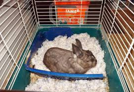 Pine Bedding For Guinea Pigs by The Wiccan Life Sam U0027s New Bunny Bedding