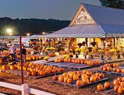 Pumpkin Patch Chesapeake Va by Virginia Beach Best Fall Activities