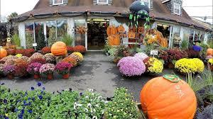Nj Pumpkin Picking by Halloween At Sunset Farm Market Ocean Township Nj New Jersey