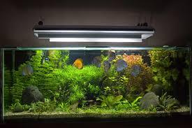 aquarium d eau douce aquarium d eau douce tropical photo stock image 6119838