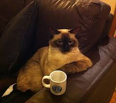 cat coffee cat with coffee with cats