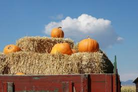 Mccalls Pumpkin Patch Albuquerque Nm by This Is The Best Pumpkin Patch In New Mexico To Visit This Fall