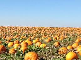 Pumpkin Farms In Nj by Pumpkin Patches Nw Kids Magazine