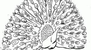 Peacock Coloring Pages For Adults Top Coloring Peacock Coloring