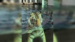 Social Networking Petition Calls For LSU To Stop Using Mike VII