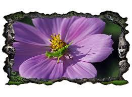 3d wandtattoo grille grün lila blume grashüpfer bild selbstklebend wandbild sticker wohnzimmer wand aufkleber 11h029 3dwandtattoo24 de