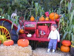 Livermore Pumpkin Patch by Best Pumpkin Patches And Farms In The San Francisco Bay Area