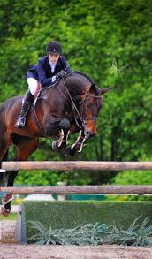 Best 25+ Hunter Jumper Ideas On Pinterest   Hunter Horse, Horse ... Autumn Hills Farm Pin By 21 Days Diet Plan On Horses Pinterest Horse Hunter Hunters Jumpers Equitation Equestrian Hillmar Farm Welcome Beckett Run Inc About Us News Alabama Association Corrstone Huntjumper Traing Barn In Modesto And Saratoga Holiday Giving Equestrian Style The Peeps Foundation Is The 744 Best Hunter Jumpershow Jumping Images Florida Jumper Show Barns Med Kennedy Grove Stables Tommi Clark Chosenbrook Show Jumper Sale