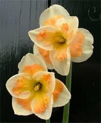 narcissus s birth month flower december tatoo ideas