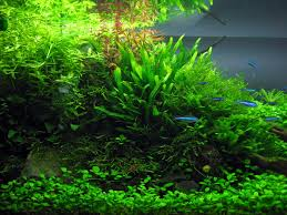 CO2 - The Main Nutrient - Aqua Rebell Aquascape Pond Pump Problems Tag Aquascape Pond Products Pumps Red Rock Journal By James Findley The Green Machine Cuisine Live Designs Set Up Idea Fish Aquascapes Water Garden Installation Setup Articles With Freshwater Aquarium Community Tank Post Your Favorite Natural Ipirations And Adventures In Aquascaping Tanks Books Lets Start With A Ada Learn All The Basics Of Niwa Pisces Amazing Amazon Beautify Home Unique