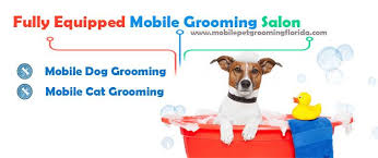 mobile cat grooming mobile pet grooming weston