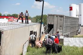 Truck Hauling Hogs Tips Over - Brandon Sun News For Foodliner Drivers Alo Driving School 1221 W Airport Fwy Suite 217 Irving Tx Funeral Saturday At Sun Prairie High Captain Cory Barr Trucking Biz Buzz Archive Land Line Magazine Texting While Driving Wikipedia Hundreds Of Chickens Fly Coop After Slaughterbound Truck Overturns Trucker Supply Falling Short Demand 17 Towns In 2017 Big Cabin Provides Window To Trucking World Firefighter Killed In Gas Explosion Identified Fding Dangerous Trucks Can Be Inspectors Needleinhaystack Potato Mashed Under Train Overpass Milwaukee Wisc 160 Academy Truckersreportcom Forum 1 Cdl