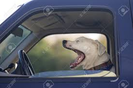 Close-up Of Dog Yawning While Inside A Truck, USA Stock Photo ... Hot Dog Of A Food Truck Pays Off For Monroe Fatherson Duo Driver In Arizona Forgets Leashed To Famous Dog Ramp For Truck Ideas Bravasdogs Home Blog The Best Is It Legal Put The Back Pickup Treat East Greenbush Albany Ny Mugzys Barkery Traveling With Your Pet This Holiday Part 4 Mckinney Animal Driving Lorry Stock Photos Images Alamy Crate Pickup N Treats Free Window Cute Canine Transportation Waiting Love Like A Truckin Farmer And Near Photo Getty Why You Shouldnt Let Your Ride Back One