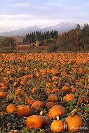 Pumpkin Patch Milwaukee by Pin By Gail Johnson On Autumn When God Shows Us The Colors Of
