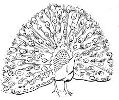 Hard Coloring Pages For Adults Of Peacocks Drawn Peafowl Page 6
